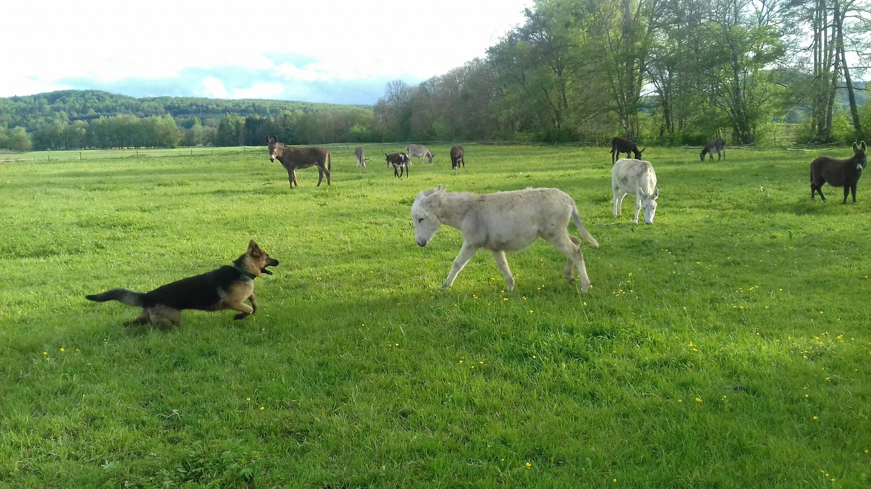 Pique-nique au pays des ânes