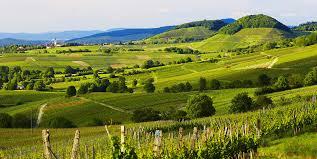 Asperges et vins bio dans le Pays de Bade
